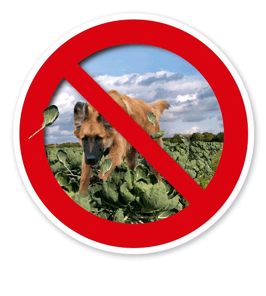 Verkehrsschild Hunde verboten – Nahrungsmittelschutz