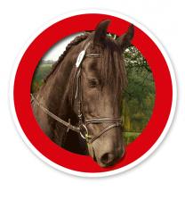 Verkehrsschild Für Pferde / Reiten verboten