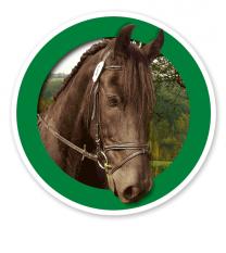 Verkehrsschild Für Pferde / Reiten erlaubt
